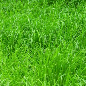 grass-1395553